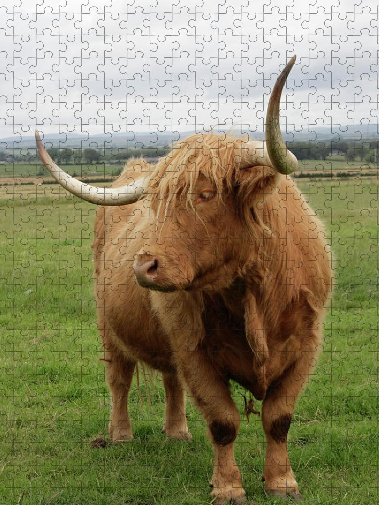 Horned Puzzle featuring the photograph Highland Cattle by Thyme