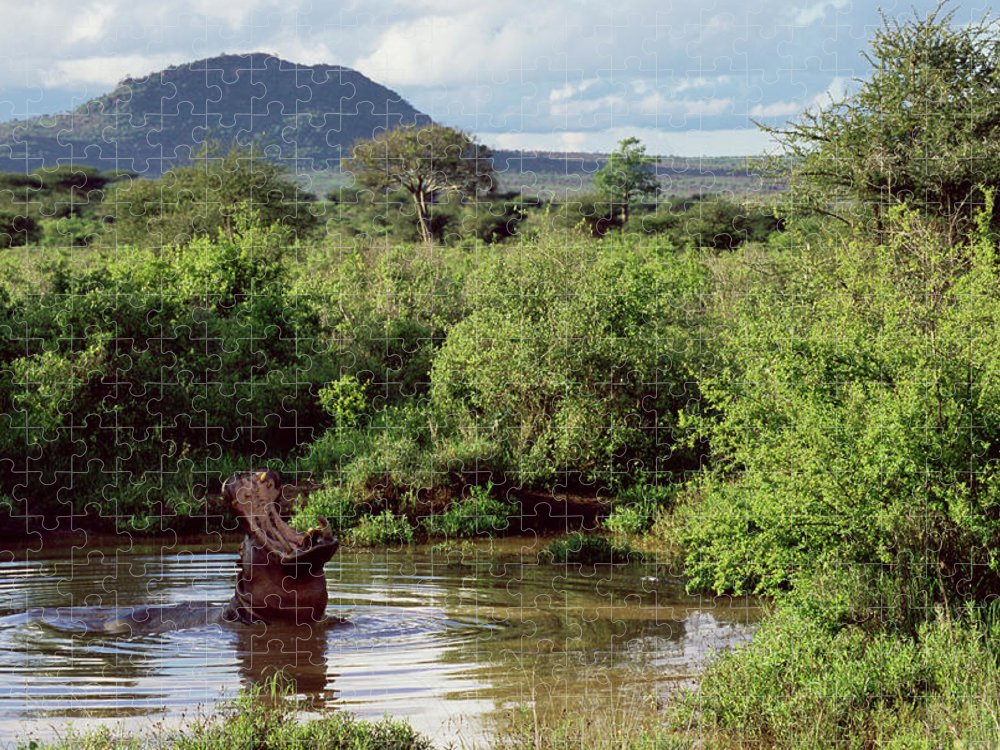 Scenics Puzzle featuring the photograph Hippopotamus Emerging From Water, Mouth by James Warwick