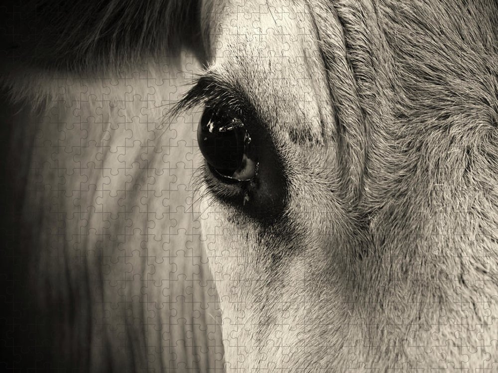 Horse Puzzle featuring the photograph Horse Eye by Karena Goldfinch