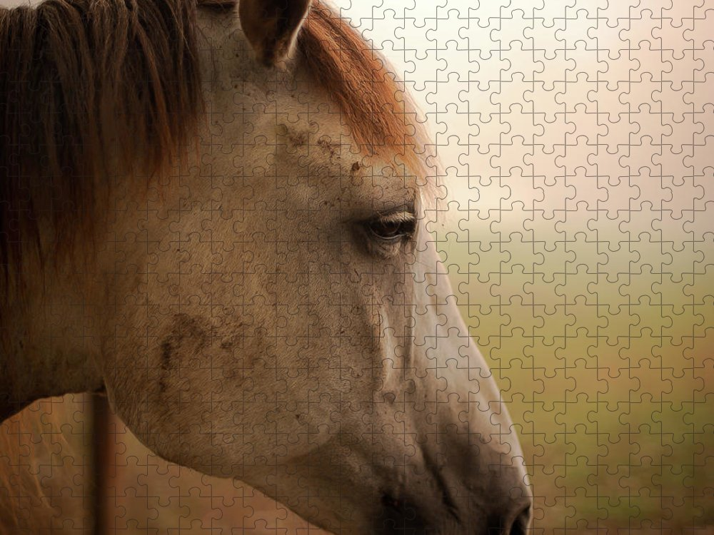 Horse Puzzle featuring the photograph Horse Head Profile by Tru View Photography