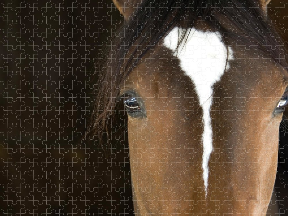 Horse Puzzle featuring the photograph Horse Head by Rterry126