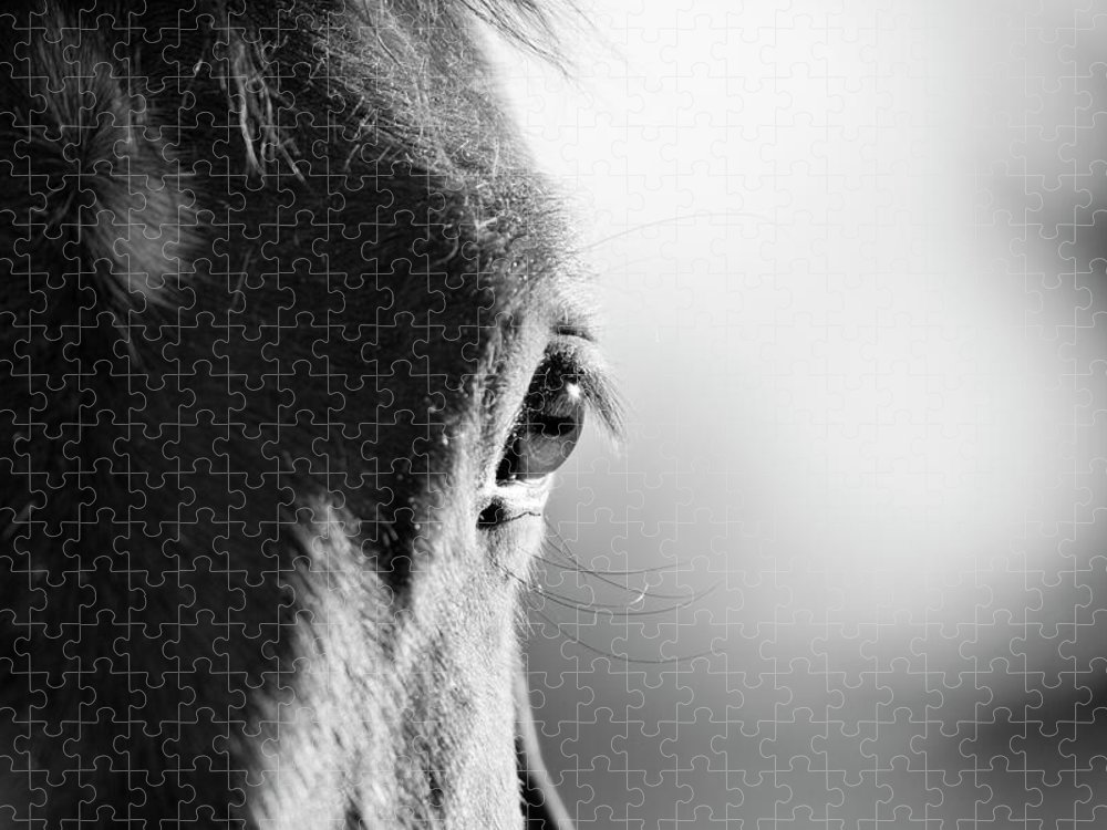 Horse Puzzle featuring the photograph Horse In Black And White by Malcolm Macgregor