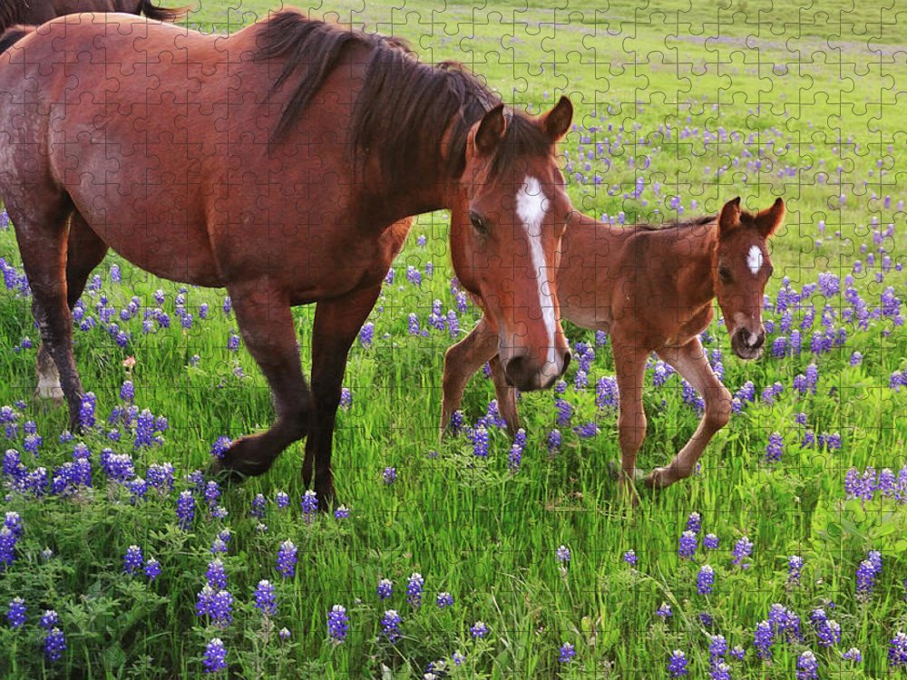 Horse Puzzle featuring the photograph Horse On Bluebonnet Trail by David Hensley