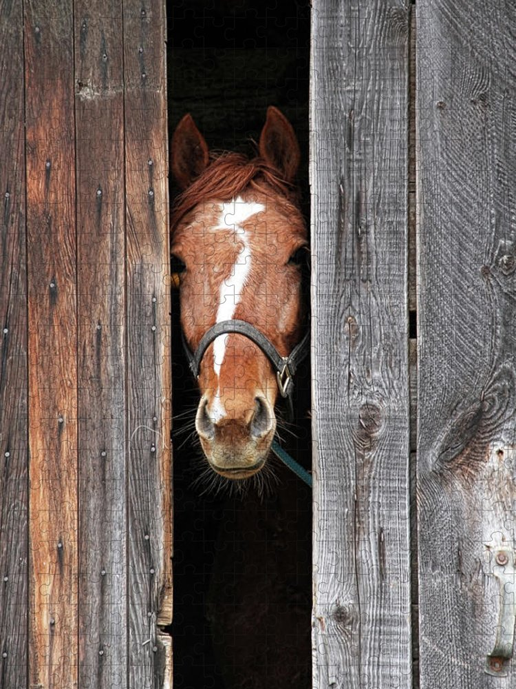 Horse Puzzle featuring the photograph Horse Peeking Out Of The Barn Door by 2ndlookgraphics