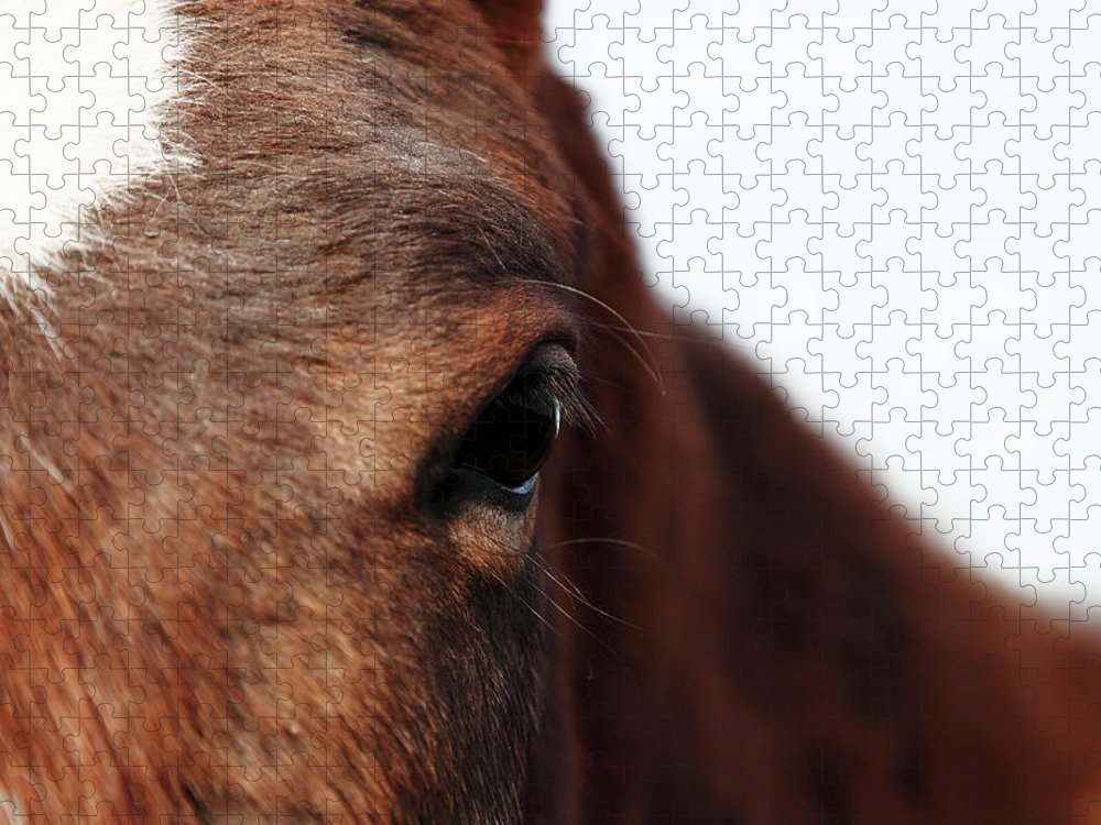 Horse Puzzle featuring the photograph Horse Portrait by R-j-seymour
