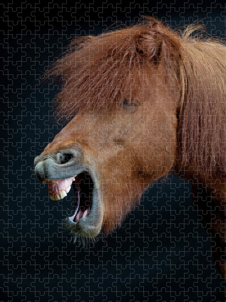 Horse Puzzle featuring the photograph Horse Showing Teeth, Laughing by Arctic-images