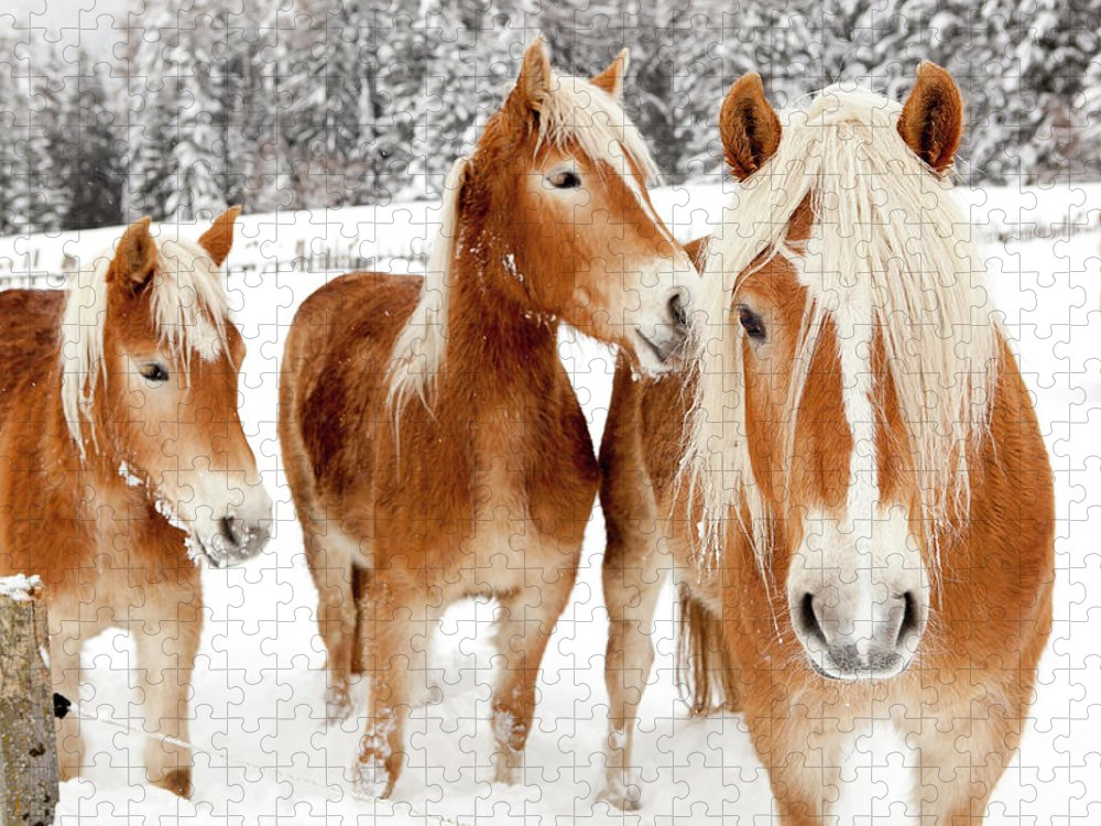 Horse Puzzle featuring the photograph Horses In White Winter Landscape by Angiephotos