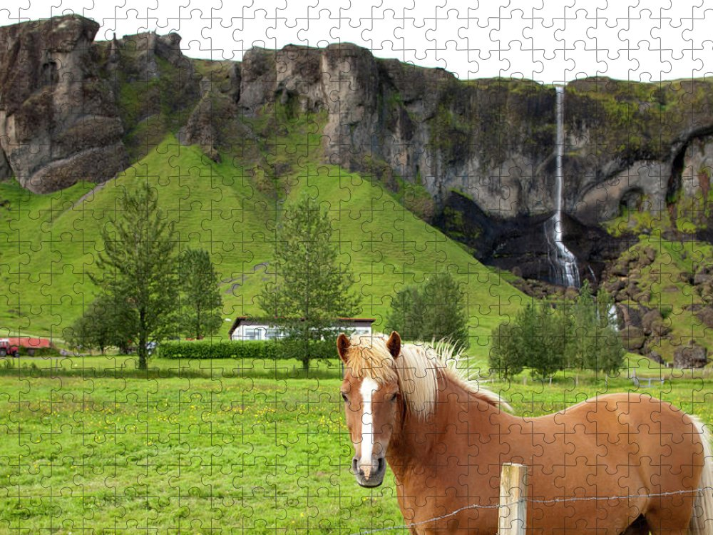 Scenics Puzzle featuring the photograph Icelandic Horse And Waterfall, Vik by Paul Souders