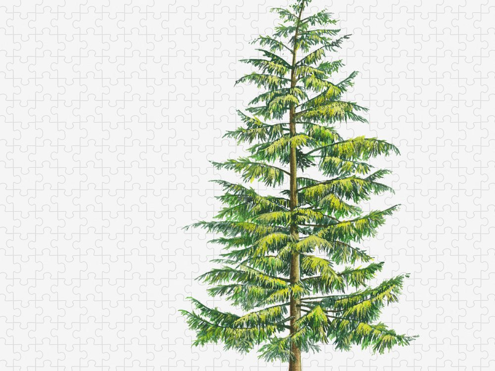 Watercolor Painting Puzzle featuring the digital art Illustration Of Large Evergreen Tsuga by Sue Oldfield