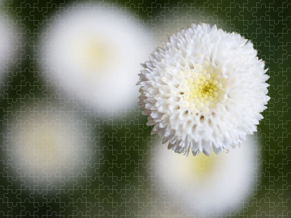 Bud Puzzle featuring the photograph Isolated White Flower Bud by Tim Green