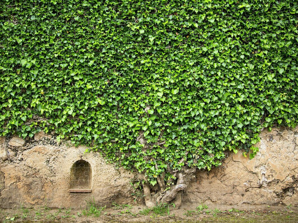 Arch Puzzle featuring the photograph Ivy On A Wall Of Villa Cimbrone, Ravello by Buena Vista Images