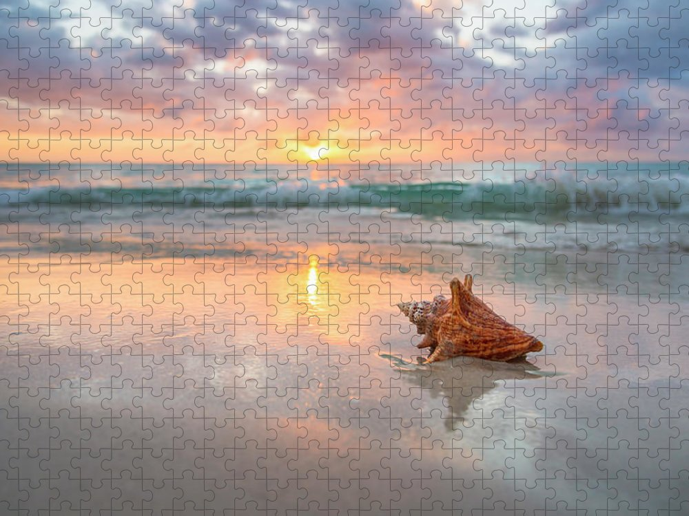 Nature Puzzle featuring the photograph Jamaica, Conch Shell On Beach by Tetra Images
