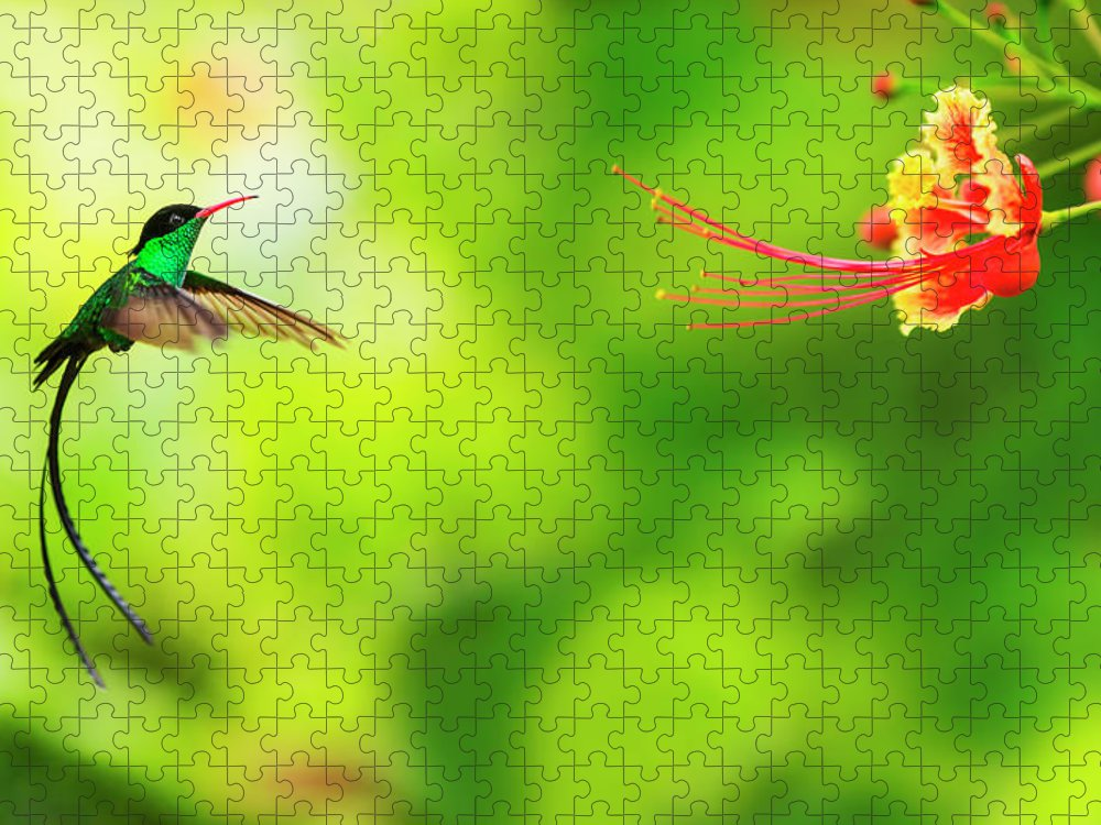 One Animal Puzzle featuring the photograph Jamaica, Hummingbird In Flight by Tetra Images