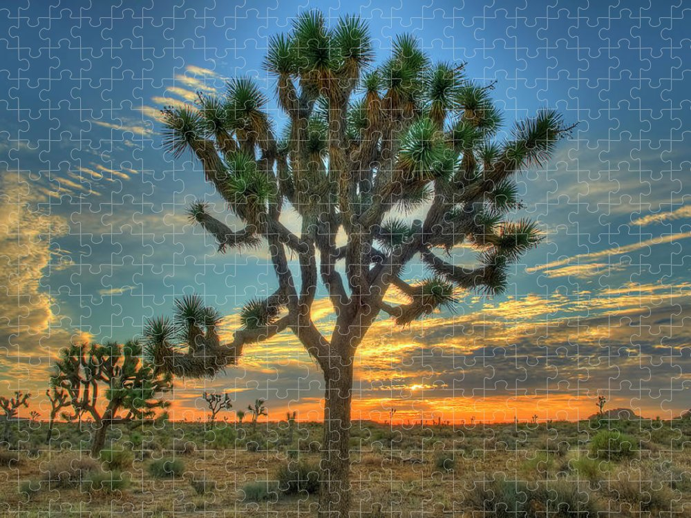 Scenics Puzzle featuring the photograph Joshua Tree At Sunrise by Photograph By Kyle Hammons