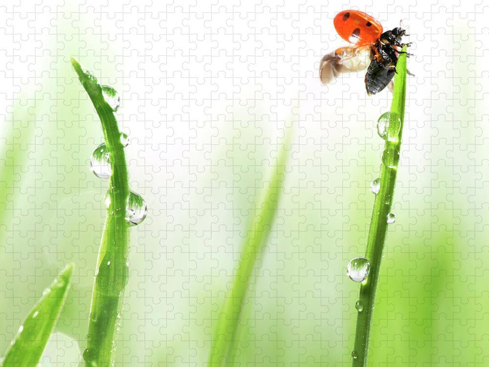 Hanging Puzzle featuring the photograph Ladybug On Green Grass by Sbayram