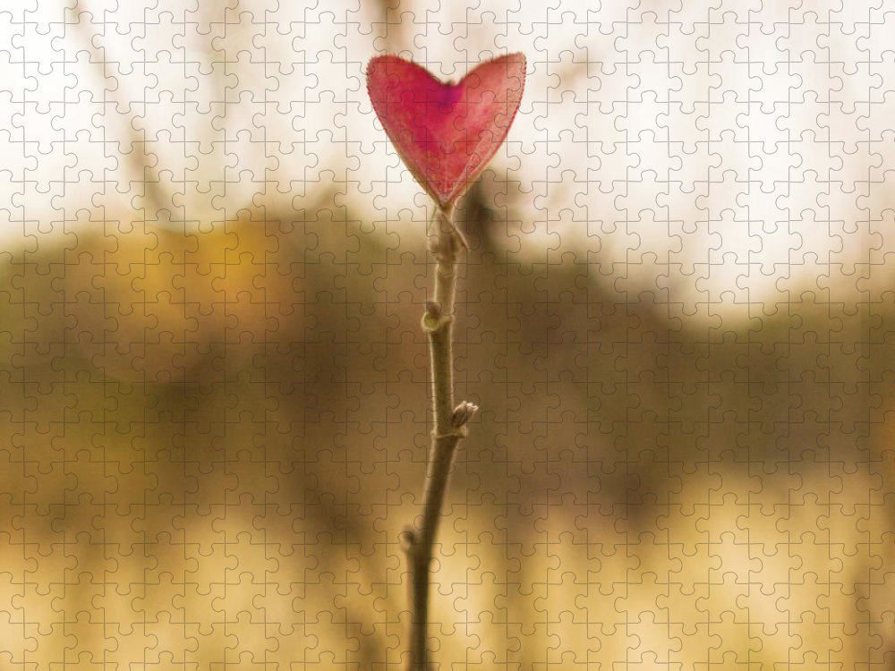 Outdoors Puzzle featuring the photograph Leaf In Heart Shape by Twomeows