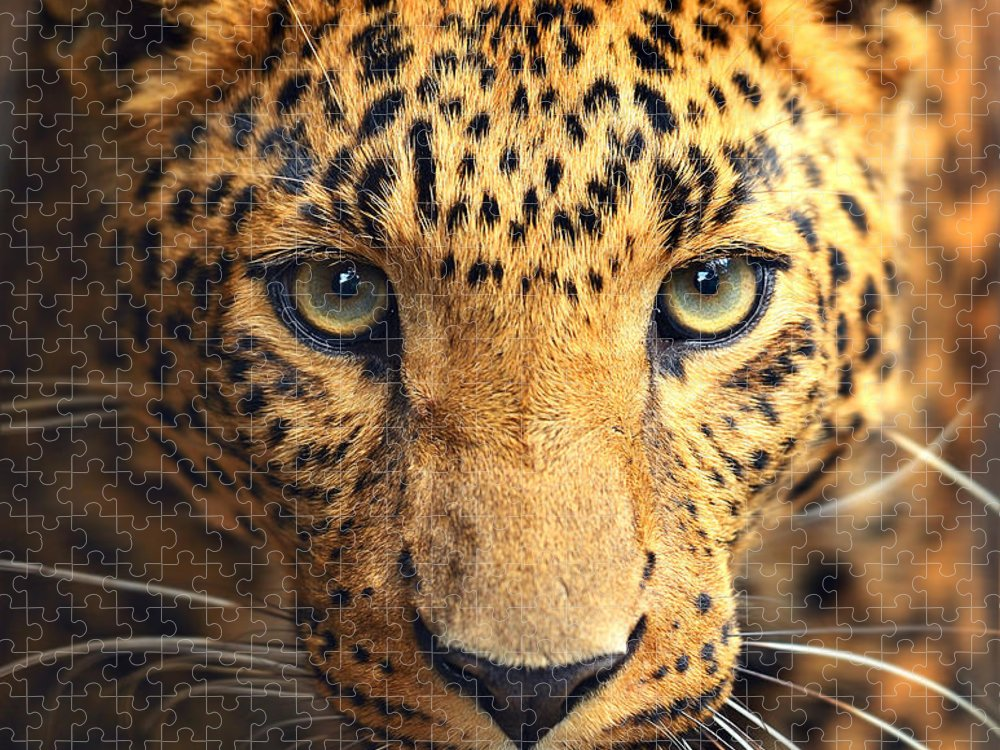 Big Puzzle featuring the photograph Leopard Portrait by Kyslynskahal