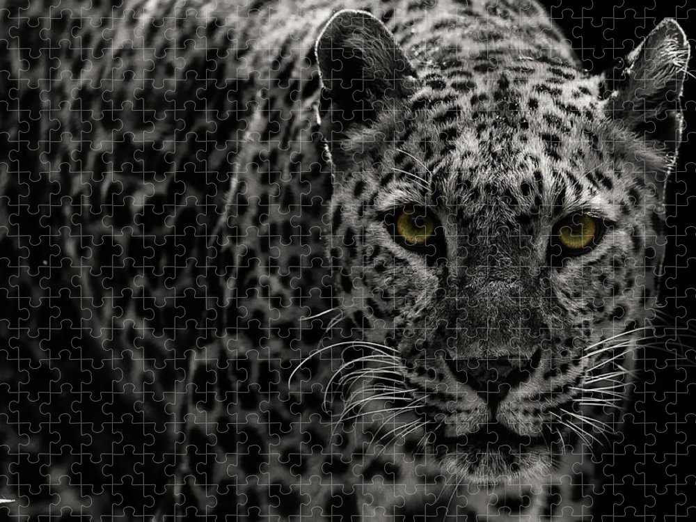 Big Cat Puzzle featuring the photograph Leopard by Somak Pal