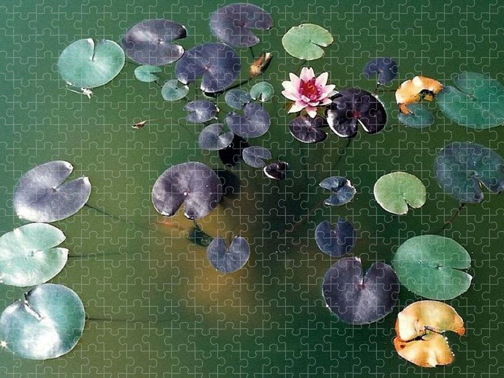 1980-1989 Puzzle featuring the photograph Lillypad by Margherita Wohletz