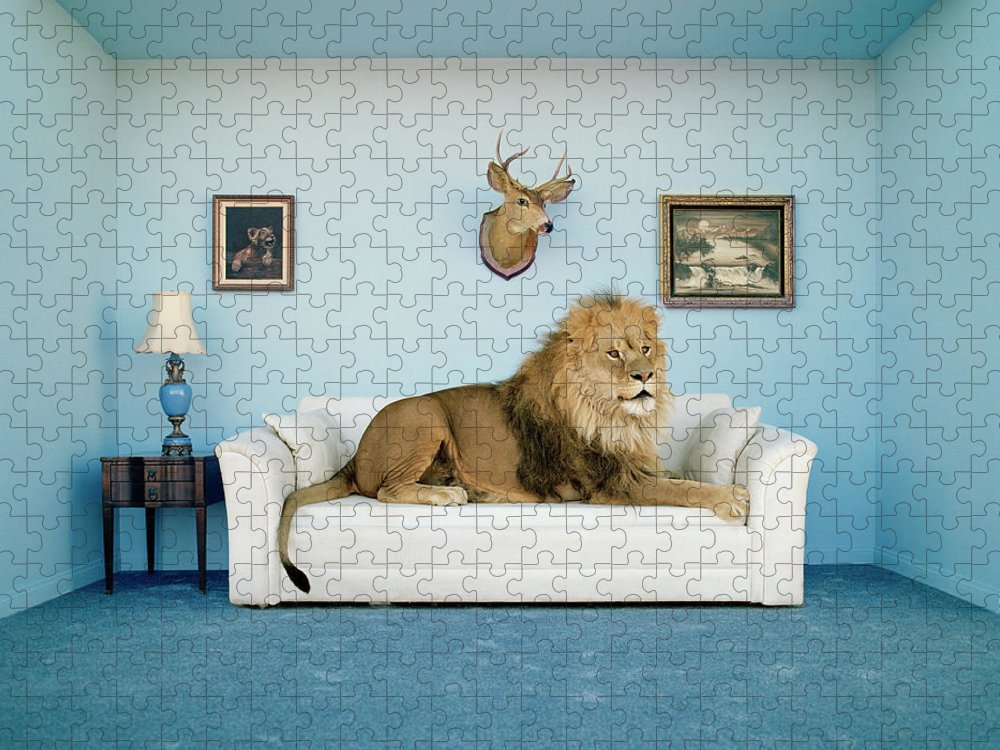Pets Puzzle featuring the photograph Lion Lying On Couch, Side View by Matthias Clamer