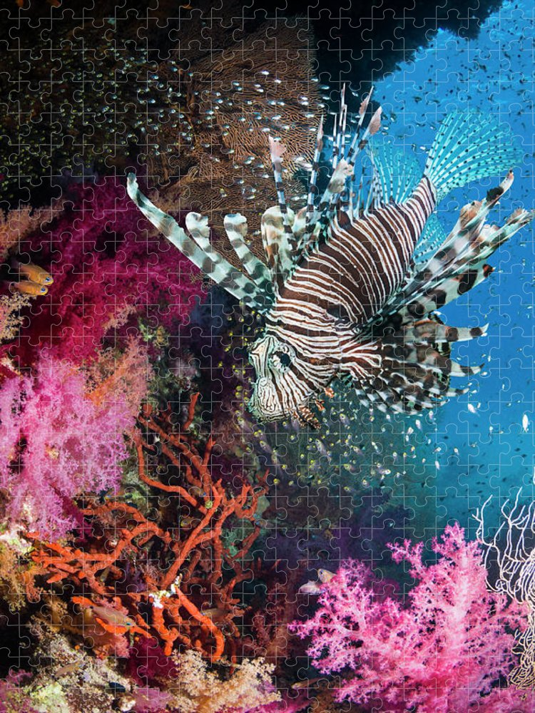 Underwater Puzzle featuring the photograph Lionfish Over Coral Reef by Georgette Douwma