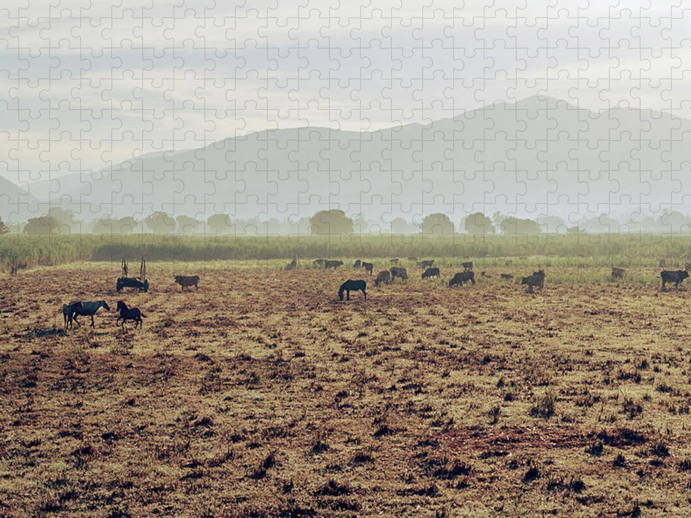 Horse Puzzle featuring the photograph Livestock On A Farm Land Near Jacmel by Cultura Exclusive/philip Lee Harvey