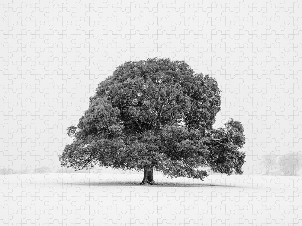 Scenics Puzzle featuring the photograph Lone Holm Oak Tree In Snow, Somerset, Uk by Nick Cable