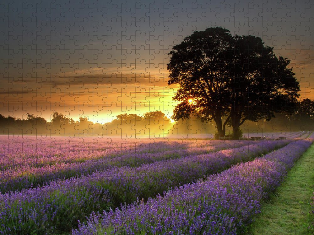 Tranquility Puzzle featuring the photograph Mayfair Lavender At Sunrise by Getty Images