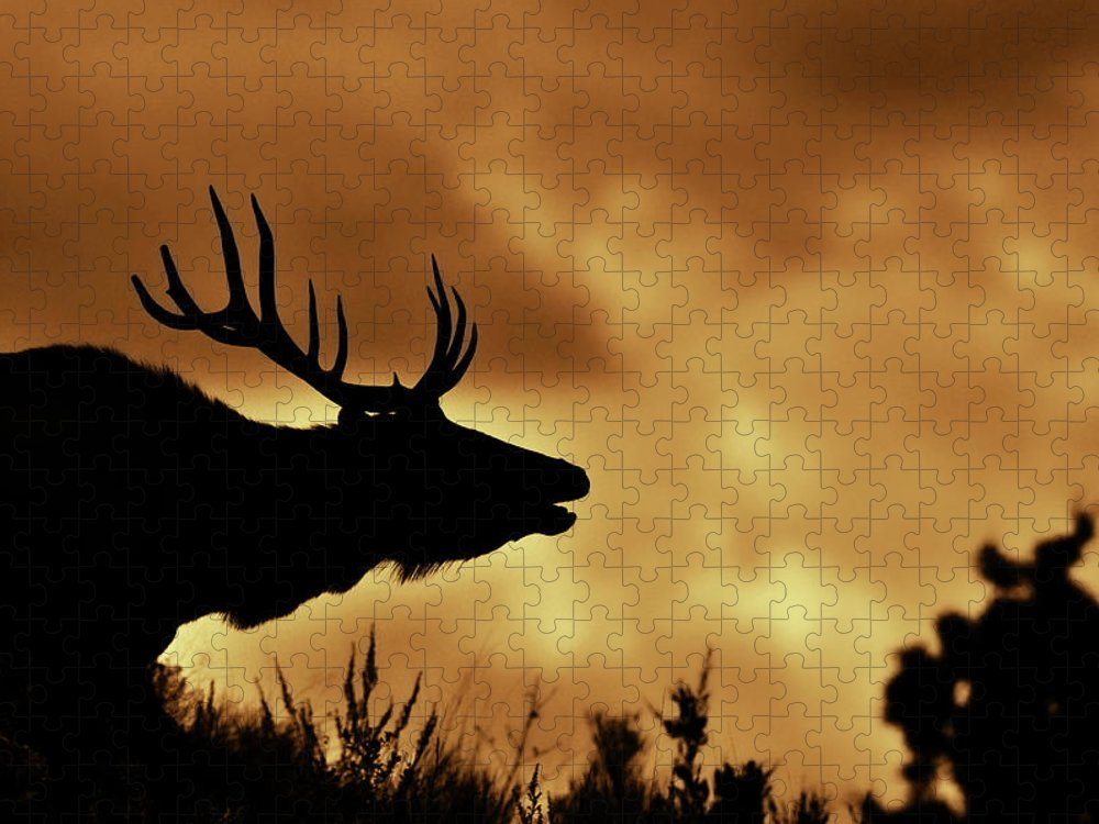 Animal Themes Puzzle featuring the photograph Moose At Sunrise by Photo By James Keith