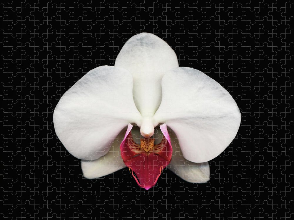 Black Background Puzzle featuring the photograph Moth Orchid Against Black Background by Mike Hill
