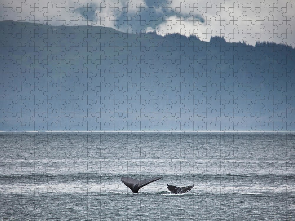 Water's Edge Puzzle featuring the photograph Mother And Calf Whale Tails Megaptera by Blake Kent / Design Pics