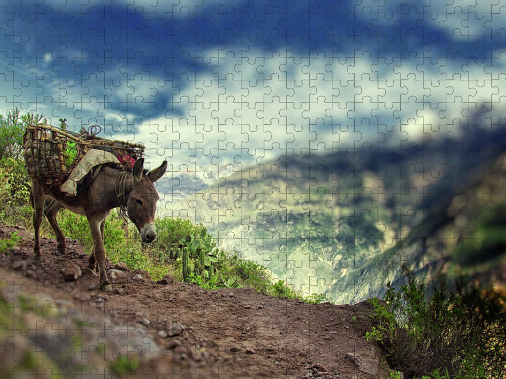 Working Animal Puzzle featuring the photograph Mountain Donkey by By Kim Schandorff