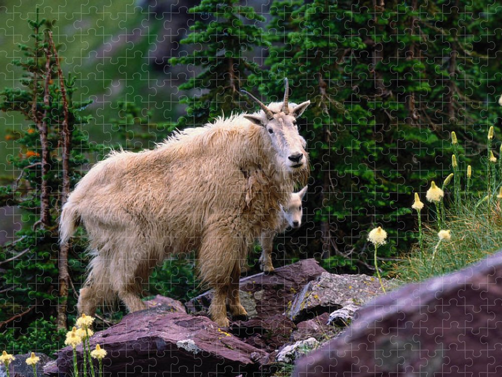Animal Themes Puzzle featuring the photograph Mountain Goat Oreamnos Americanus by Art Wolfe