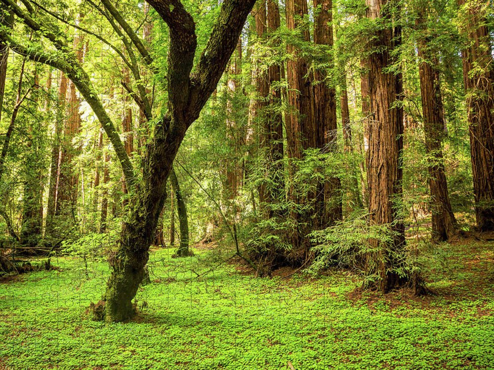 Tranquility Puzzle featuring the photograph Muir Woods Forest by By Ryan Fernandez