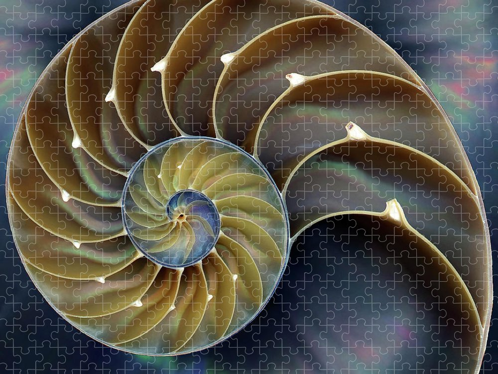 Cephalopod Puzzle featuring the photograph Nautilus by 0049-1215-16-2610334597
