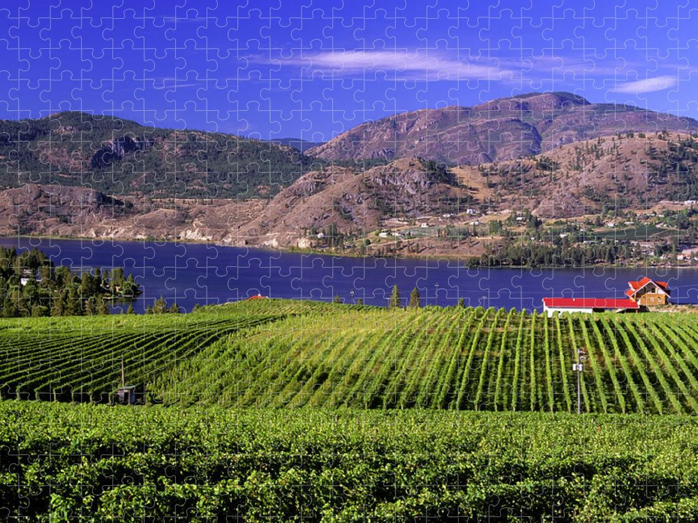 Scenics Puzzle featuring the photograph Okanagan Valley Vineyard by Laughingmango