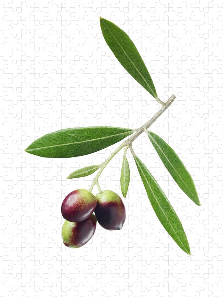 White Background Puzzle featuring the photograph Olives On Branch by Lauren Burke