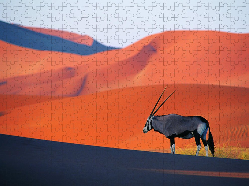 Scenics Puzzle featuring the photograph Oryx Antelope by Natphotos