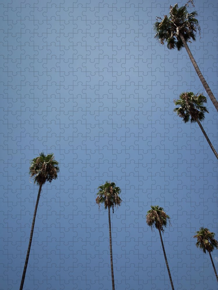 Tranquility Puzzle featuring the photograph Palm Trees by Tuan Tran