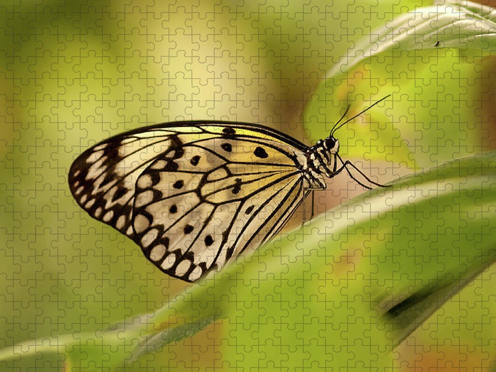 Natural Pattern Puzzle featuring the photograph Paper Kite Butterfly by Photos By Jay Bee