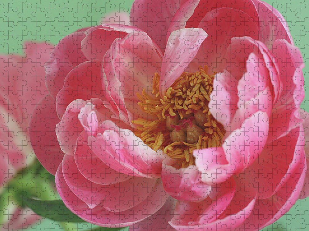 California Puzzle featuring the photograph Peony by © 2011 Staci Kennelly