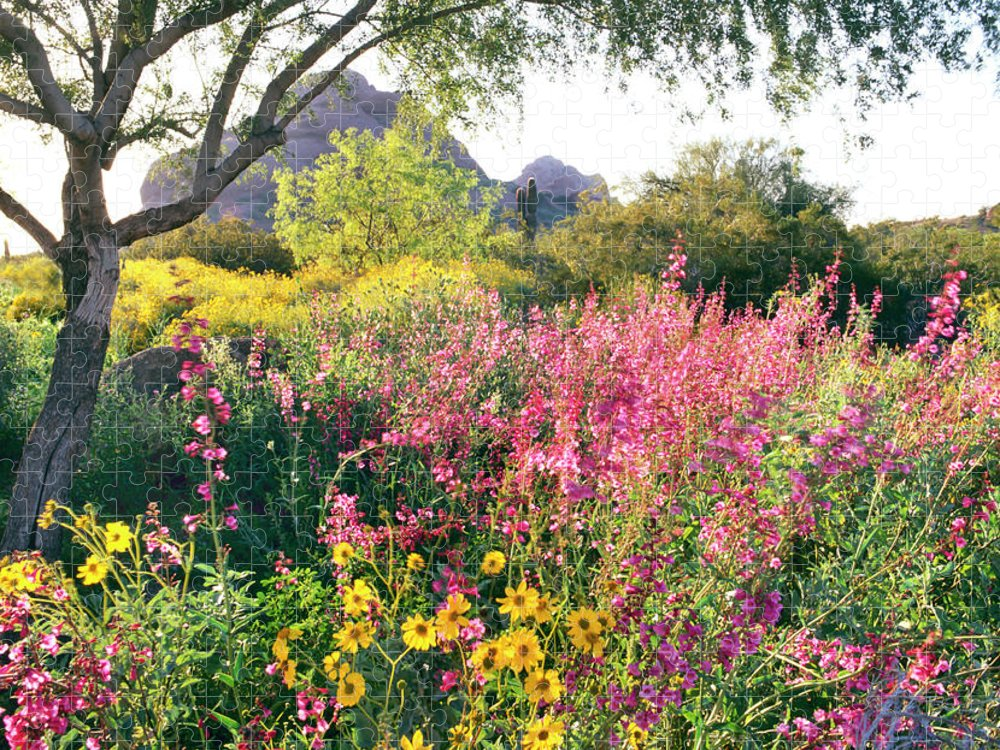Scenics Puzzle featuring the photograph Phoenix Botanical Gardens by Richard Felber