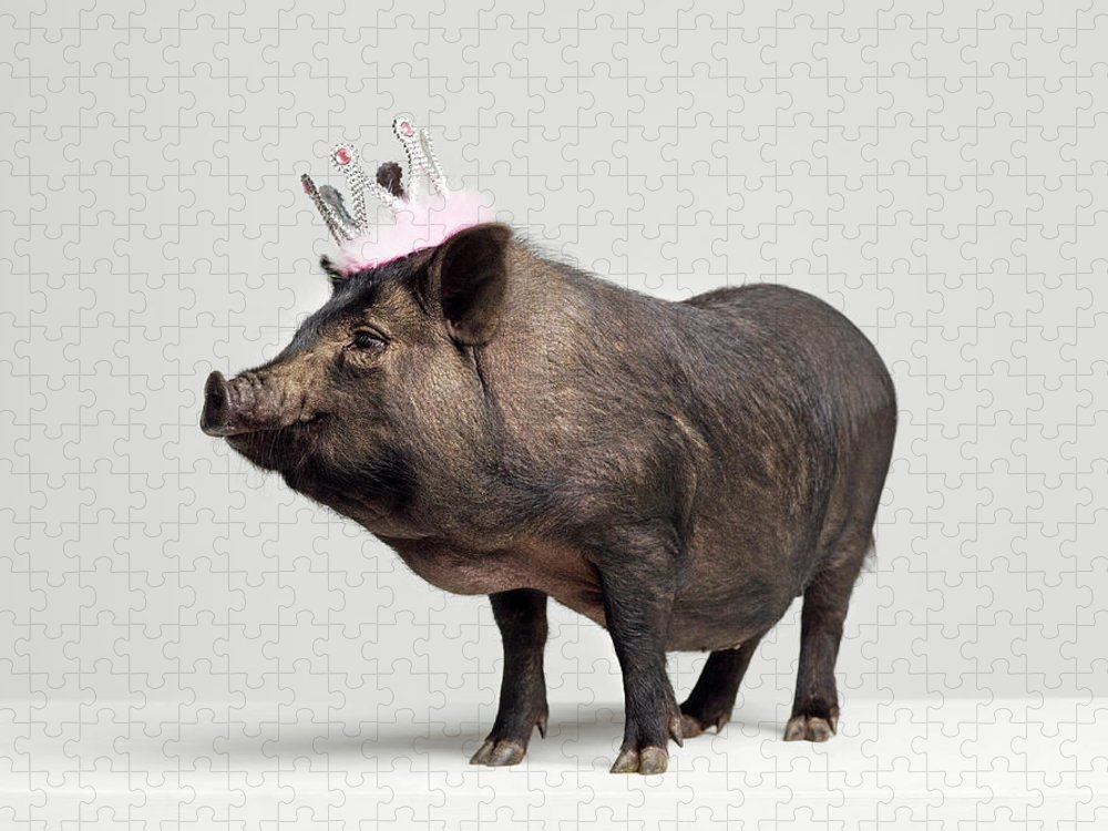 Crown Puzzle featuring the photograph Pig With Toy Crown On Head, Studio Shot by Roger Wright