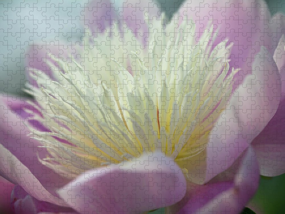 Toronto Puzzle featuring the photograph Pink And White Peony by Lynda Murtha