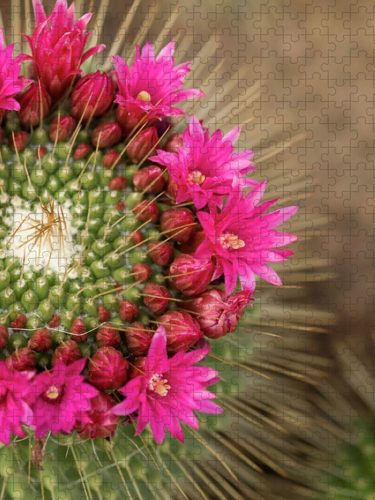 Bud Puzzle featuring the photograph Pink Cactus Flower In Full Bloom by Zepperwing