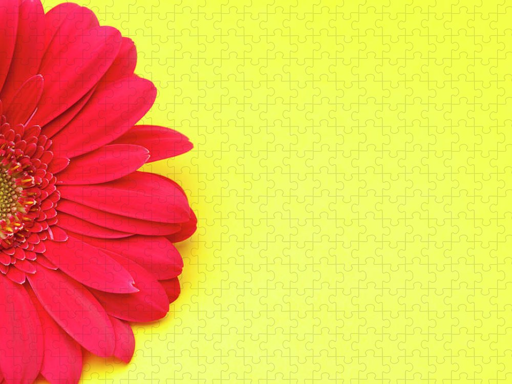 Petal Puzzle featuring the photograph Pink Gerbera Daisy On Yellow Background by Jill Fromer