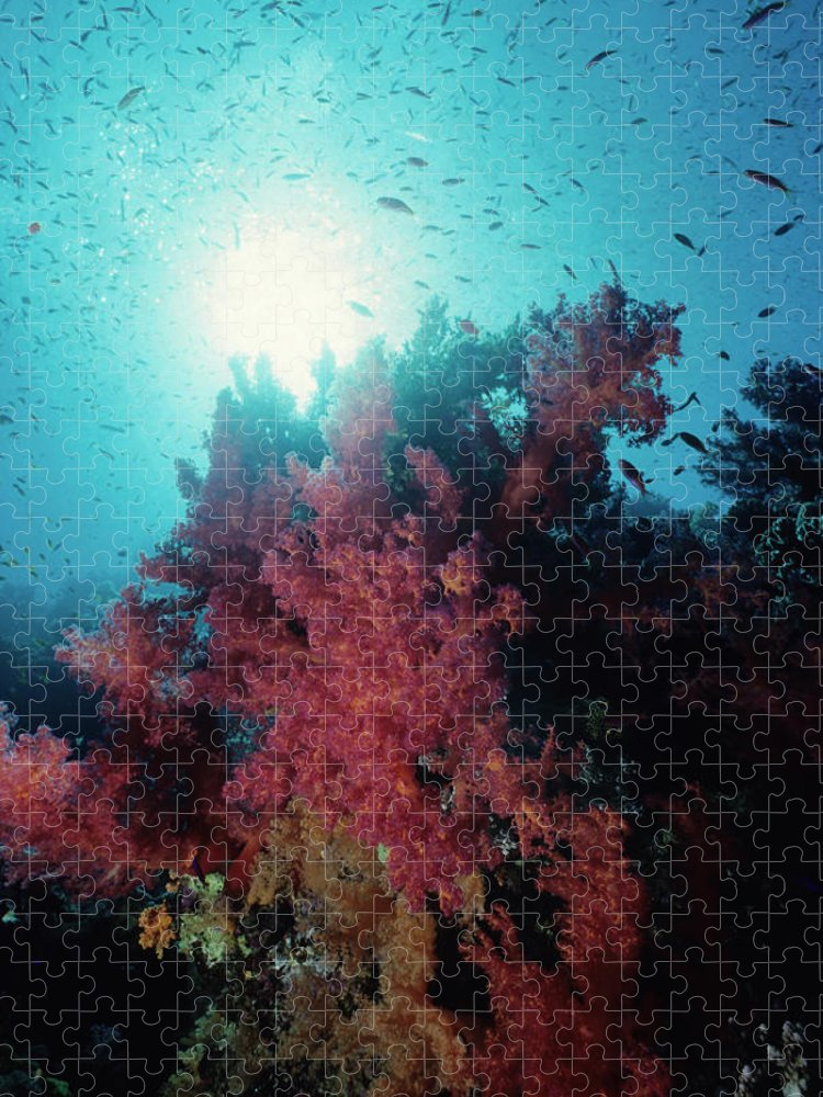 Underwater Puzzle featuring the photograph Pink Soft Coral And Anthias by Tammy616