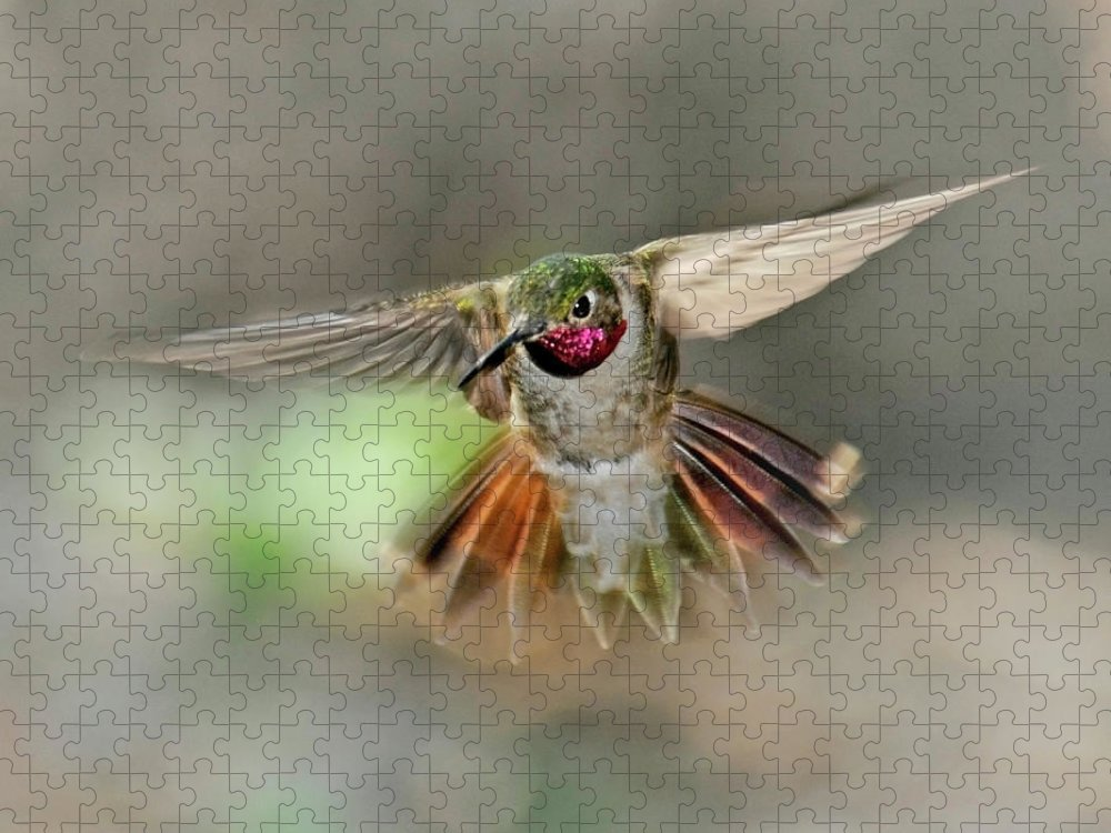 Dawn Puzzle featuring the photograph Poetry In Motion - Hummingbird Hovering by Eastman Photography Views Of The Southwest