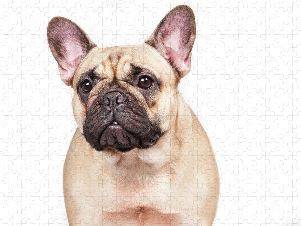 Pets Puzzle featuring the photograph Portrait Of A French Bulldog by @hans Surfer
