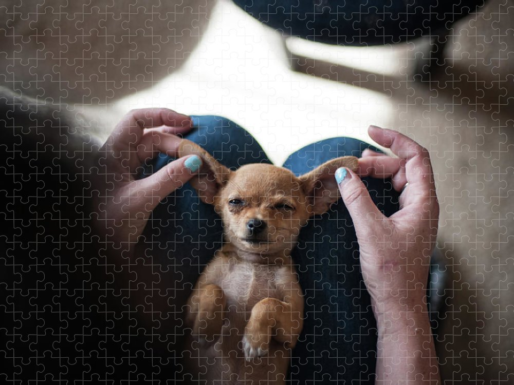 Pets Puzzle featuring the photograph Pov - Pets by Jono Winnel